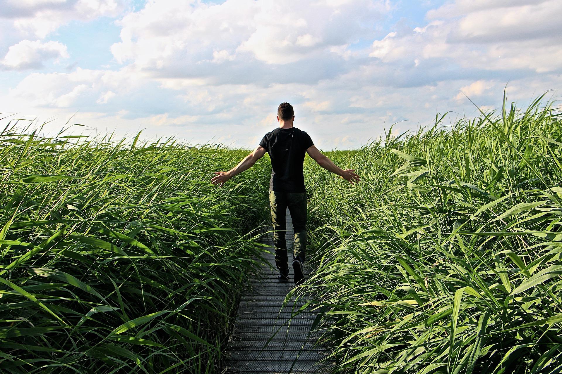 Spazieren gehen im hohen Gras